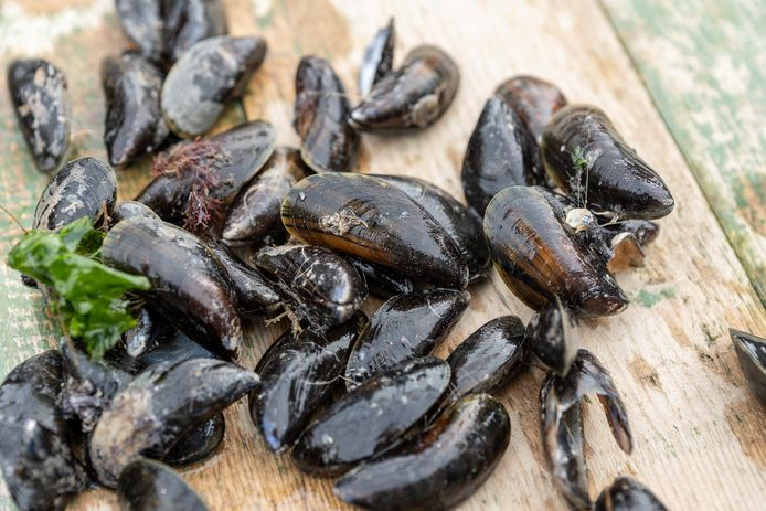 Mossels (archief).