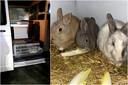 De elf konijntjes werden onderzocht en stellen het goed.