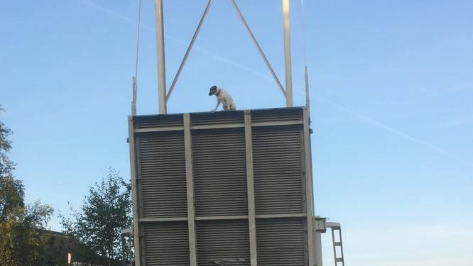 Hond Remy (1) klampt zich bibberend en piepend vast aan brug als deze plotseling opengaat