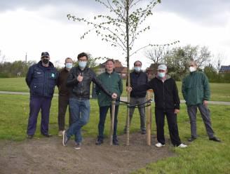 Ambitieus plan wil de juiste boom op de juiste plaats: 13.000 aanplantingen de komende jaren