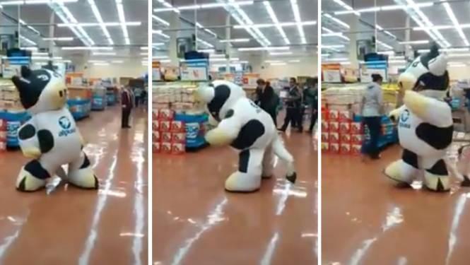 Hoog tijd om deze dansende koe opslag te geven