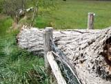 Dierendrama in Overijssel: ooievaarsnest slaat te pletter