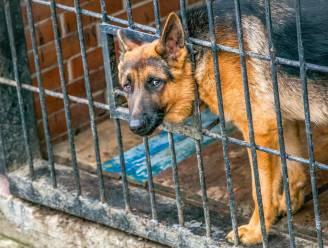 """""""Hij zat nat en angstig in hoek van tuin"""": politie redt hond van zware verwaarlozing"""