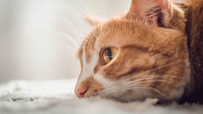 """""""Veel verborgen leed bij katten omdat baasjes hun gedrag niet begrijpen"""""""