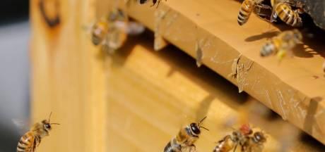La justice européenne valide les mesures pour protéger les abeilles