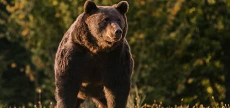 """Le prince du Liechtenstein abat le """"roi"""" des ours roumains: """"C'est une honte"""""""