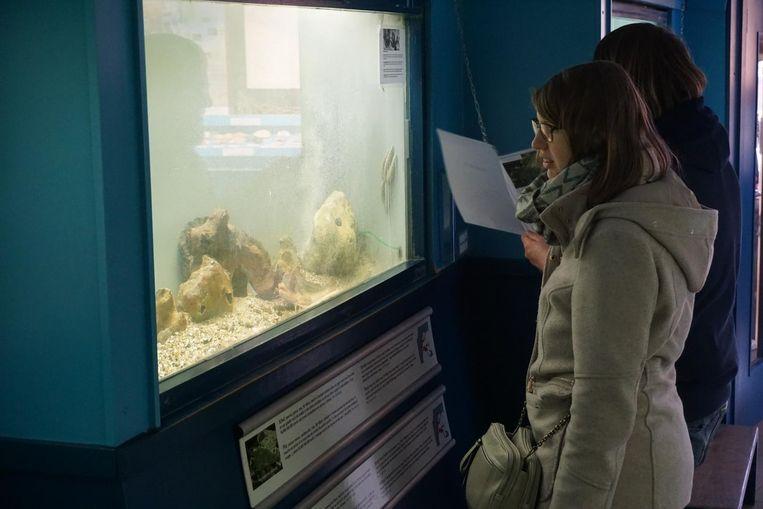 Kleine aquaria en een bundel A4'tjes aan een ketting. Informatief is het wel, maar erg vrolijk word je er niet van.