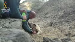 Spaanse politie redt hond uit bosbranden Gran Canaria