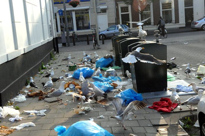 Overlast door meeuwen in de Van Hogendorpstraat (archieffoto).