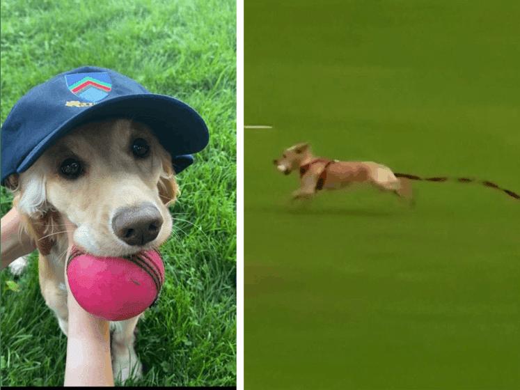 Hondje steelt bal tijdens cricketwedstrijd in Noord-Ierland en veroorzaakt chaos