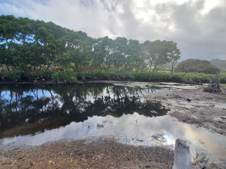 Mauritius werd vorig jaar getroffen door een olieramp. Beeld Reuters
