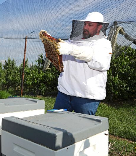 Overdag een zoommeeting, 's avonds naar de zoemers: 'Bijenhouden is een hobby die nooit gaat vervelen'