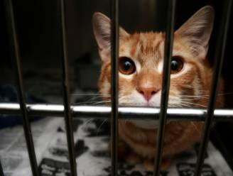 "GAIA: ""Aantal dierproeven op katten fors gestegen"""