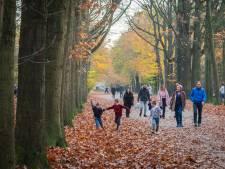 Bredase bossen dreigen ten onder te gaan aan eigen succes: 'De stad wordt een bedreiging'