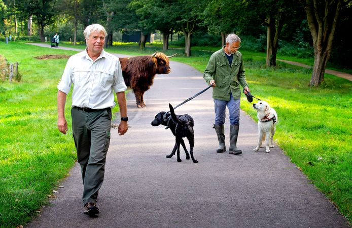Boswachter Dick van Stegeren (links) op het zogenoemde Rundereiland in het Lage Bergse Bos.  Rotterdammer Hans laat zijn labrador Diede en golden retriever Eef er iedere dag uit.