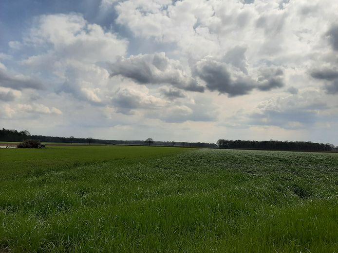 De Kwaalburgse Heide, open agrarisch gebied met bos rondom in Alphen.