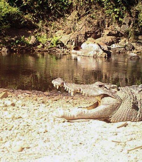 """Un Australien survit à l'attaque d'un crocodile: """"Il a mis ses mains dans la mâchoire pour dégager sa tête"""""""