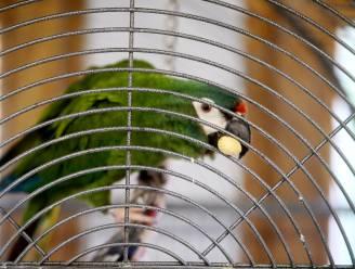 Vlaanderen trekt geld uit voor Vogelopvangcentrum en Papegaaienopvang Nally