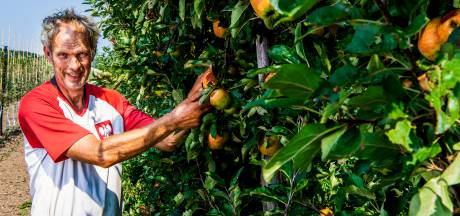 Fruittelers moet alle zeilen bijzetten: Oogst loopt schade op door tropische temperaturen en hete zon