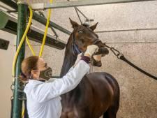 Negen paarden overleden aan virus in Valencia