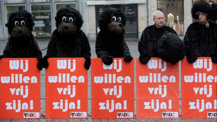 De Anti Dierproeven Coalitie voert al sinds 2009 herhaaldelijk protestacties tegen de experimenten met resusaapjes. Beeld PHOTO_NEWS