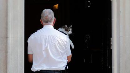 Wachtende journalisten kunnen lach niet inhouden wanneer Larry de kat snel wordt binnengehaald voor speech van May