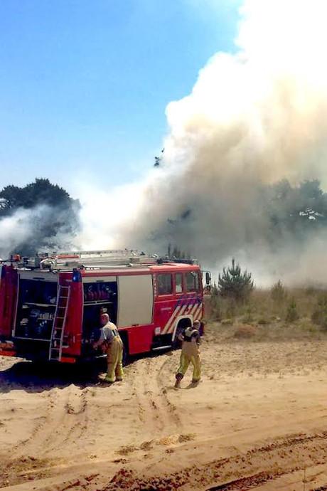 Bosbrand in Budel onder controle