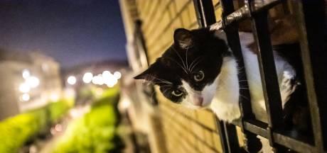 Zwollenaar die krijsende moederkat en kitten in zomerhitte op balkon achterliet: 'Ik wil ze terug'