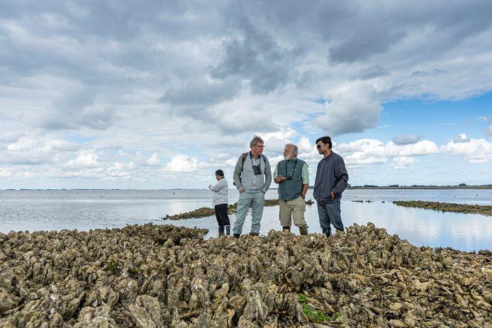 Inspectie van een oesterrif bij Viane (Schouwen-Duiveland). Vlnr: de Bengalese professor Shahadat Hossain (linksachter), emeritus hoogleraar Aad Smaal, de Amerikaanse professor Loren Coen en promovendus Shah Chowdhury.