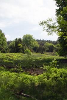 Landschap Overijssel zoekt heidemerk voor Lemelerberg