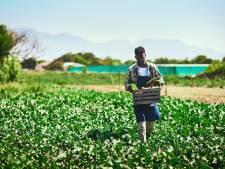 Goedkope kunstmest maken met bliksem in een doosje; TU/e geeft kleine Afrikaanse boer een kans