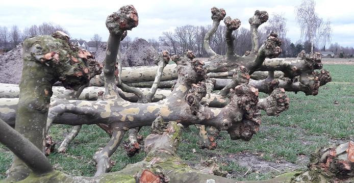 Natuurspeeltuin Heesch Krijgt Vorm Met Levende En Omgezaagde Bomen
