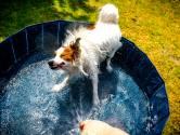 Vitens: 'Stop met tuin sproeien en zwembadjes vullen in Gelderland, anders valt waterdruk weg'