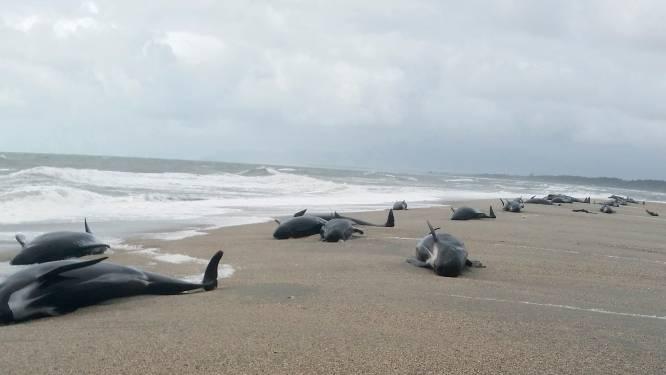 38 dode walvissen aan Nieuw-Zeelandse kust