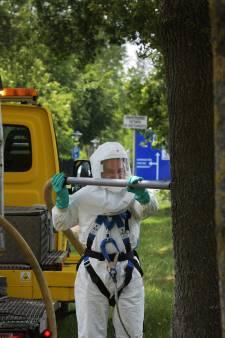 Buren: bomen gevarieerder aanplanten om boomziektes te bestrijden