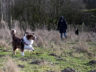 """Opening hondenweide in bos veroorzaakt heisa over irritaties aan pootjes dieren: """"Nochtans na onderzoek niets verontrustends op terrein te vinden"""""""