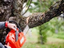 Laarbeek pakt illegale bomenkap aan