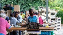 """Haspengouwse gemeenten nemen extra maatregelen voor seizoenarbeiders: """"Komen te vaak uit landen met code rood"""""""