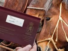 De lange reis van vier paarden uit Roemenië, valse chips en een bitter einde
