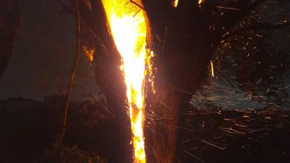 Bliksem slaat in op boom: stam verandert in vuurbal