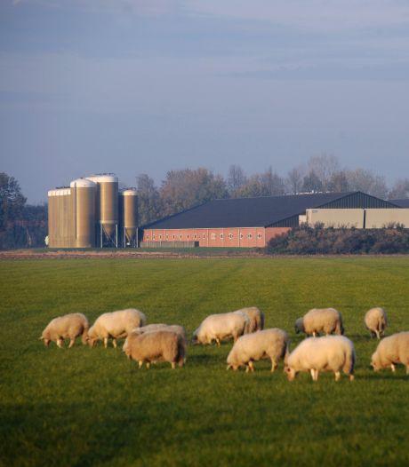 Alleen maar meer mest en stallen, onderzoekers kritisch op 20 jaar Ruimte voor Ruimte in Brabant