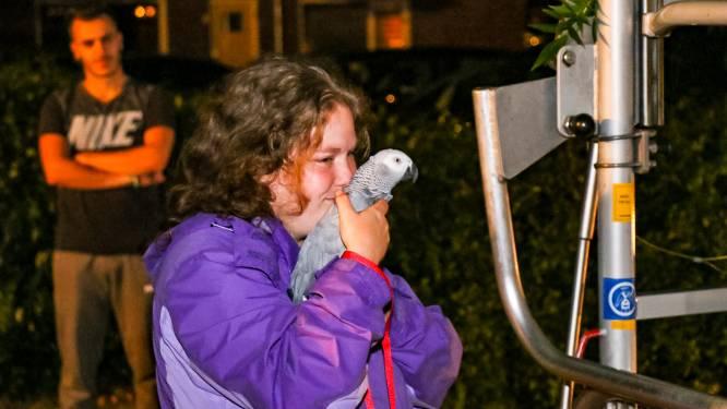 Eigenaresse van ontsnapte papegaai in Zutphen is dolblij dat de brandweer haar vogel uit een hoge boom redt