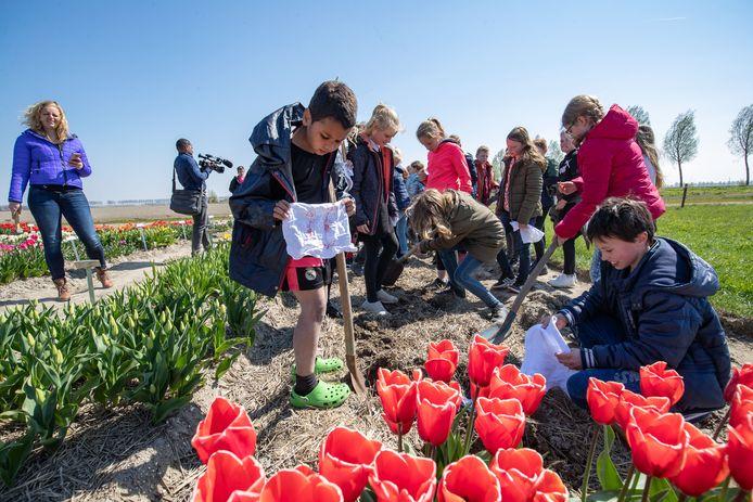 Kinderen begraven onderbroek tussen de tulpen in Creil. Het is een test hoe vruchtbaar de grond van de Noordoostpolder is.