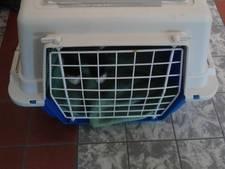 Baasje 'kan er niet meer voor zorgen' en dumpt katten in reismand