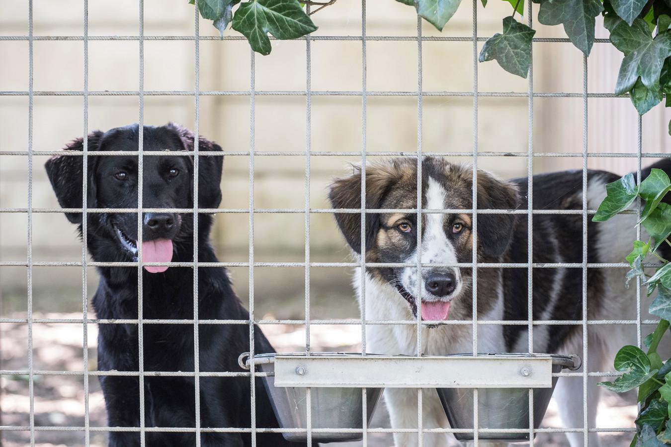Twee honden in het dierenasiel van Tiel.