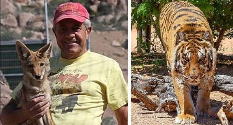 De 11-jarige Bengaalse tijger Bowie viel de directeur van het wildreservaat The Keepers of the Wild in Arizona aan.