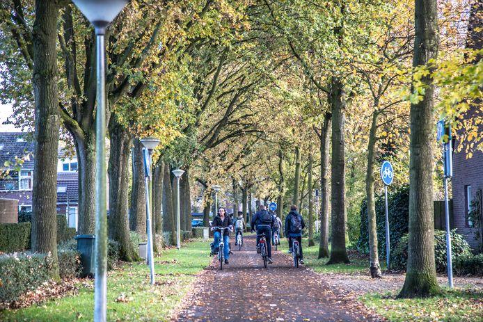 Het college van burgemeester en wethouders wil eiken kappen in Westenholte, tot onvrede van een deel van de buurt.