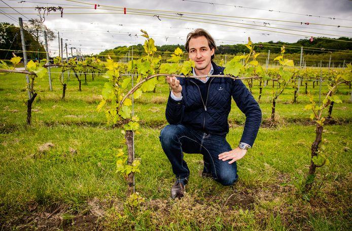 Wijnboer Bert Vandeurzen tussen zijn wijnranken in Linden in het Hageland.