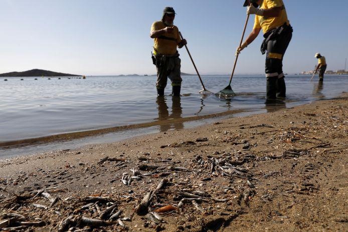 """Des employés municipaux ramassent des poissons et des crustacés morts sur le rivage de la plage """"Cala del Pino"""", dans la lagune Mar Menor de Murcie, en Espagne, le 20 août 2021."""