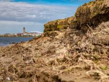 Oeverzwaluwtjes hebben dit jaar nog broedplekje: voor volgend jaar is nog geen oplossing langs IJssel